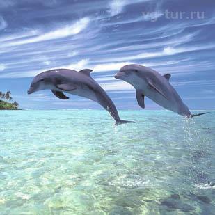 Где лучше всего созерцать дельфинов и китов