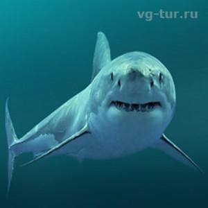 Отдыхаем рядом с акулами