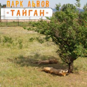 Сафари в парке «Тайган» в Крыму